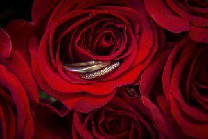 バラの花言葉✿