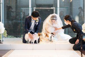 🐶リングドッグ🐶でのご結婚式