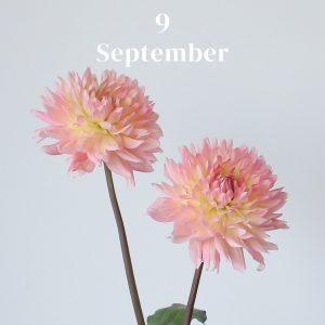 *・・9月のお花・・*